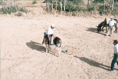 Corrida de burros (1)