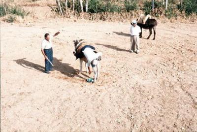 Corrida de burros (2)
