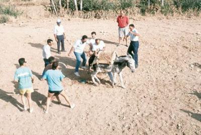 Corrida de burros (3)